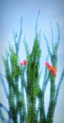 Photograph - City Flare Ocotillo Plant by Aimee L Maher Photography and Art Visit ALMGallerydotcom