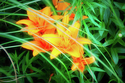 Photograph - City Flare Orange Tiger Lilies by Aimee L Maher ALM GALLERY
