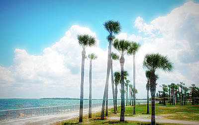Photograph - City Flare Palms Blowing by Aimee L Maher Photography and Art Visit ALMGallerydotcom