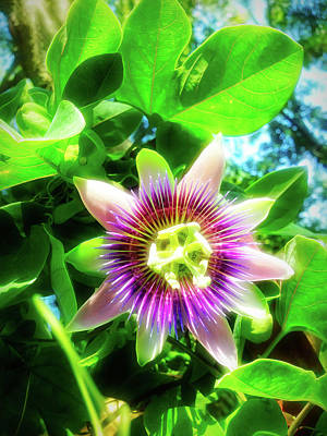 Photograph - City Flare Passion Flower 1 by Aimee L Maher Photography and Art Visit ALMGallerydotcom