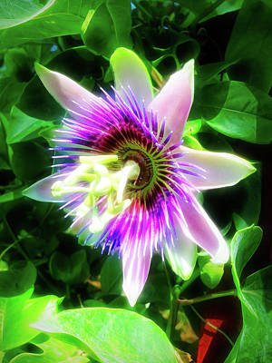 Photograph - City Flare Passion Flower 5 by Aimee L Maher Photography and Art Visit ALMGallerydotcom