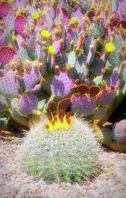 Photograph - City Flare Prickly Pear Blooms by Aimee L Maher ALM GALLERY
