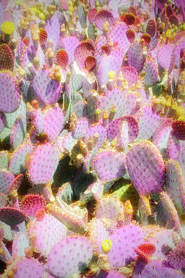 Photograph - City Flare Purple Prickly Pear 3 by Aimee L Maher ALM GALLERY