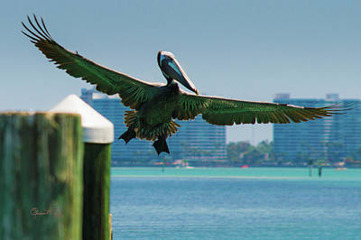Photograph - City Flight by Susan Molnar