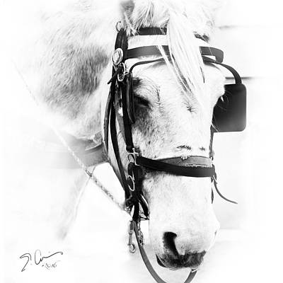 Photograph - City Horse High Key by Evie Carrier