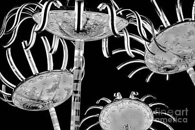Photograph - City Light Garden In Black N White by Sonya Lang