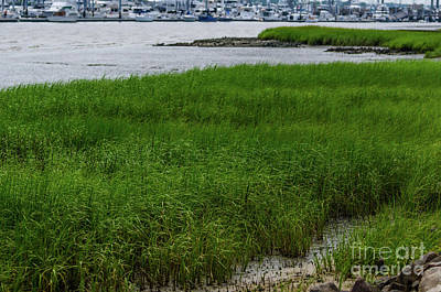 Photograph - City Marina Marsh View by Dale Powell