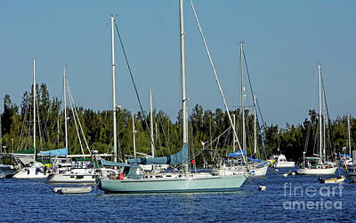Photograph - City Of Vero Beach Marina by D Hackett