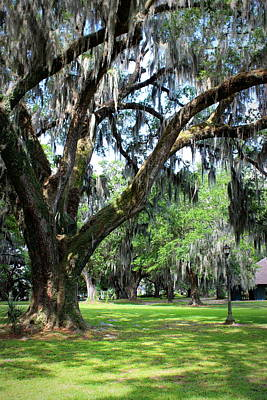 Photograph - City Park Oaks by Beth Vincent