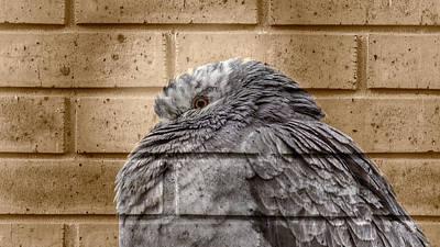 Photograph - City Pigeon In Winter Fine Art by Jacek Wojnarowski