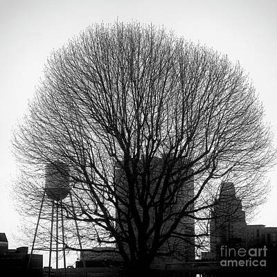 Photograph - City Tree by Patrick M Lynch