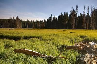 Photograph - Clackamas Meadow- H by Rick Bures