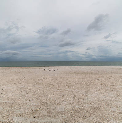 Photograph - Clam Pass Gulls by Christopher L Thomley
