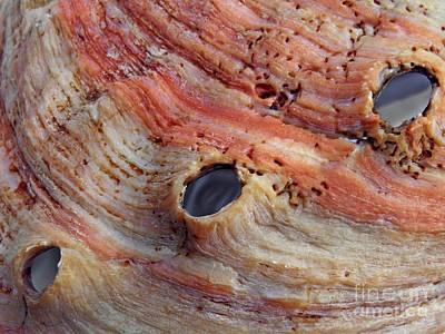 Abalone Wall Art - Photograph - Abalone Shell Abstract 1      by Sarah Loft
