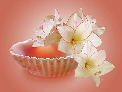 Photograph - Clam Shell With Amaryllis Flowers by Gill Billington