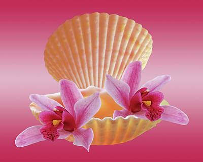 Photograph - Clam Shell With Pink Orchids by Gill Billington