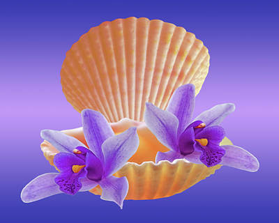 Photograph - Clam Shell With Purple Orchids by Gill Billington
