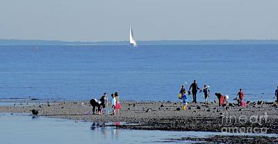 Photograph - Clamming At Low Tide by Margie Avellino