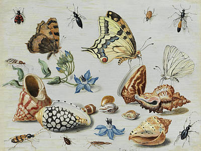Grasshopper Painting -  Clams, Butterflies, Flowers And Insects by Jan van Kessel