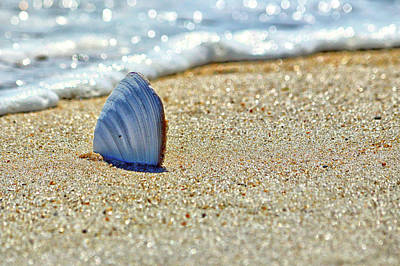 Photograph - Clamshell In The Waves On Assateague Island by Assateague Pony Photography