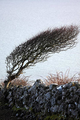Clare Coast Tree Art Print by Tom  Doherty