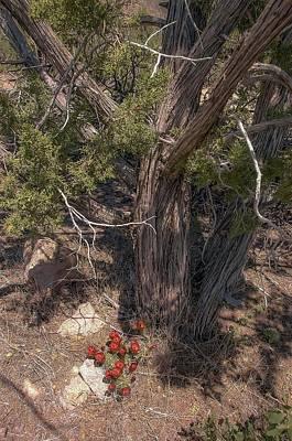 Photograph - Claret Cup Cactus #2 by NaturesPix