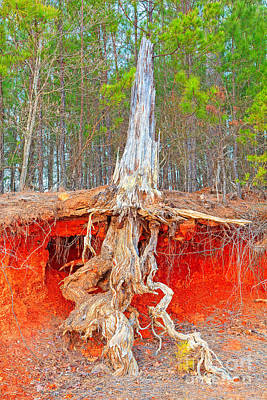 Clarks Hill Lake Photograph - Clarks Hill Roots by Steven Dillon