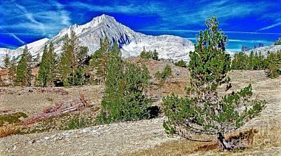 Whitebark Pines Photograph - Clark's Nutcracker Country Wide by Scott L Holtslander