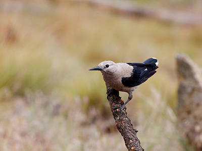 Photograph - Clarks Nutcracker by Doug Lloyd