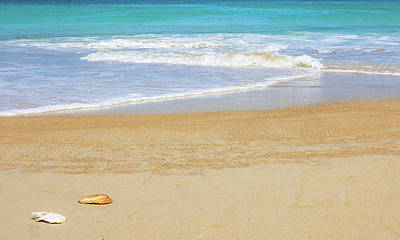 Photograph - Clashing Waves - Hazzards Beach by Lexa Harpell