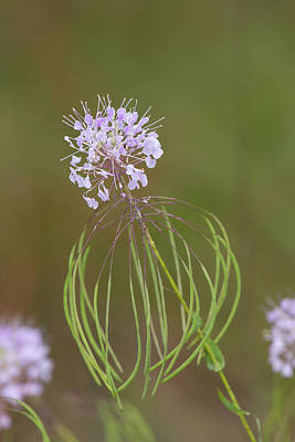 Photograph - Clasping Warea by Paul Rebmann