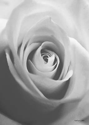 Photograph - Classic Bw Rose by Nathan Little