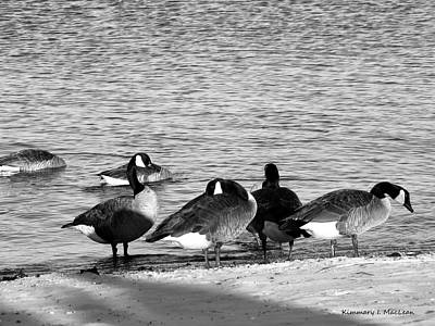 Photograph - Classic Geese by Kimmary I MacLean
