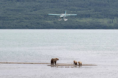 Photograph - Classic Katmai by Phil Stone