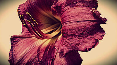 Photograph - Classic Lily by Kevin D Davis