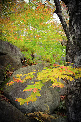 Photograph - Classic New England Foliage by Mike Ste Marie