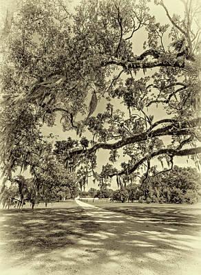 Amy Hamilton Watercolor Animals - Classic Southern Beauty - Evergreen Plantation -Sepia by Steve Harrington
