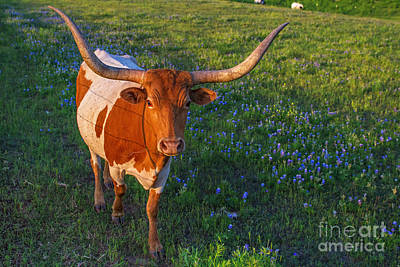 Classic Spring Scene In Texas Art Print by Gary Holmes