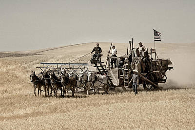 Photograph - Classic Vintage Harvest by Mary Jo Allen