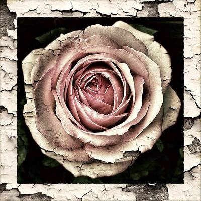 Drawing - Classic Vintage Shabby Chic Grunge Pink Roses by Joy of Life Art
