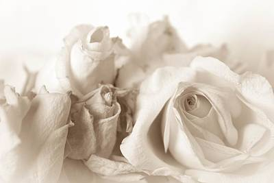 Photograph - Classic Vintage Shabby Chic White Roses by Joy of Life Art
