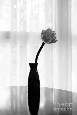 Photograph - Classic White Lotus Flower In Vase by Dean Harte