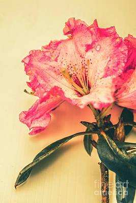 Photograph - Classical Pastel Flower Clipping by Jorgo Photography - Wall Art Gallery