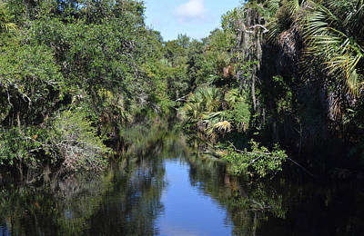 Photograph - Clay Gully Myakka River State Park Florida by rd Erickson