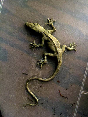 Sculpture - Clay Sketch Of An Anole by Ed Meredith