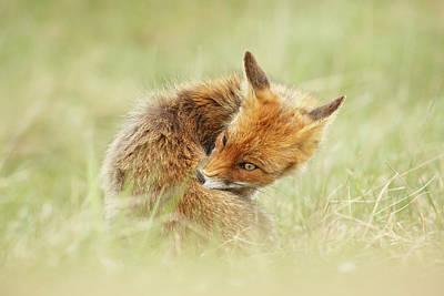 Clean Fox Art Print by Roeselien Raimond
