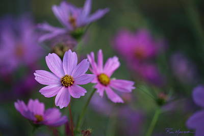 Photograph - Clear Cosmo Impressionist by Ron Monsour