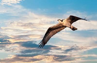 Photograph - Clear Morning Osprey by Buddy Scott