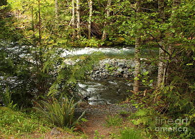 Photograph - Clear Mountain Stream by Carol Groenen
