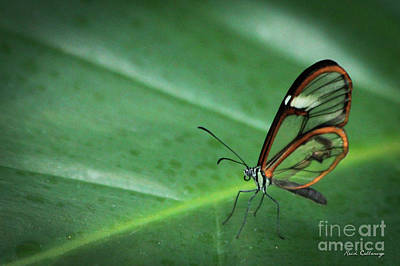 Idea Leuconoe Photograph - Clear Wing Butterfly Cecil B Day Butterfly Center Art by Reid Callaway